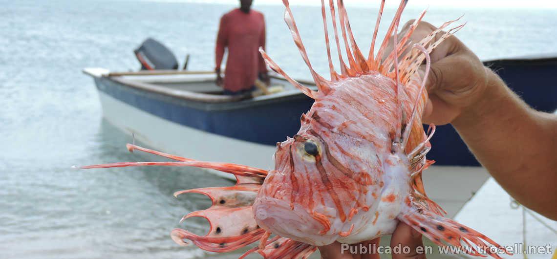 Pez León llega a las costas Venezolanas y emponzoña a pescadores
